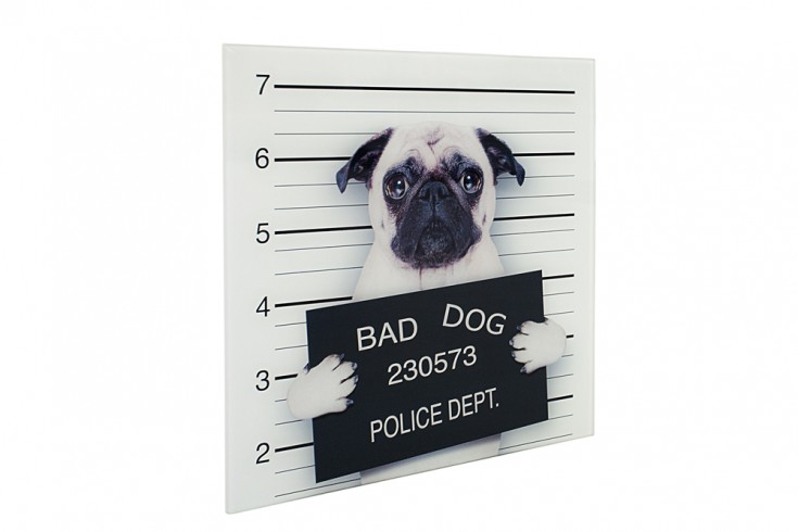 Design Kunstdruck BAD DOG 40x40cm Mops Wandbild aus Glas