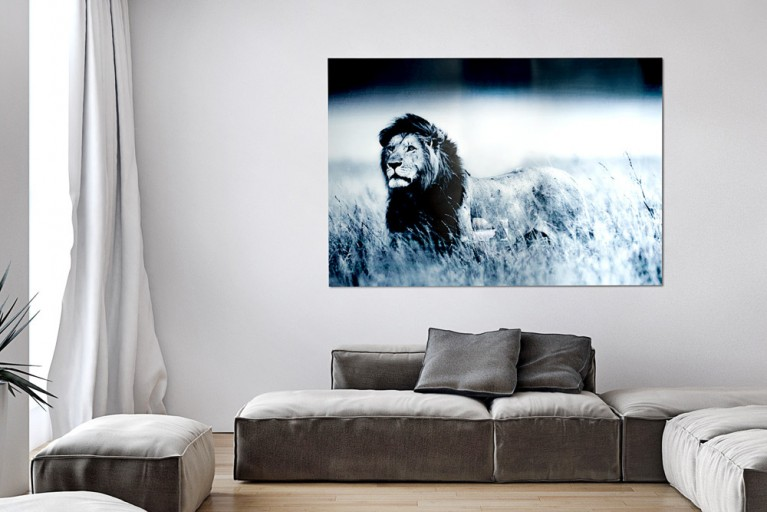 Faszinierender Glas Kunstdruck LION KING 140x95cm auf Glas Löwe