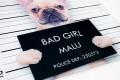 Design Kunstdruck BAD GIRL 40x40cm Französische Bulldogge Wandbild aus Glas