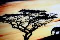 Hochwertiger Kunstdruck SAVANNE 45x140cm Wandbild aus Glas Afrika